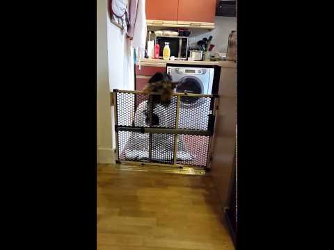 Dolly the escaping puppy.