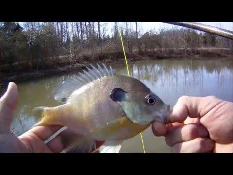 Winter Bluegill Fly Fishing with a foam popper