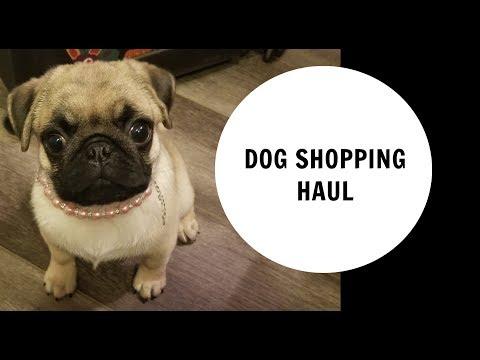 Dog Shopping Haul ! Dog clothes, Dog collar, Dog treats and more !