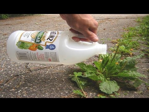 She Put Vinegar In One Of Her Garden Plants, What Happened In 1 Minute Is Incredible