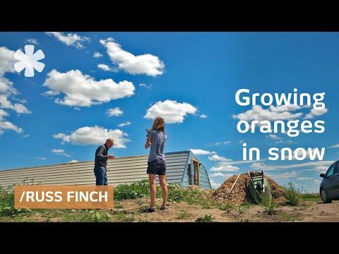 Nebraska retiree uses earths's heat to grow oranges in snow