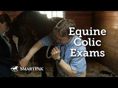 Equine Colic Exams