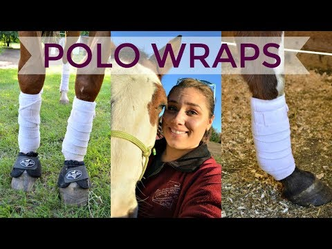 HOW TO PUT POLO WRAPS ON YOUR HORSE