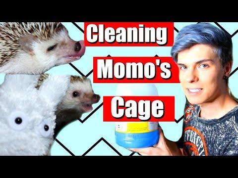 Cleaning My Hedgehog Cage! + Momo being cute