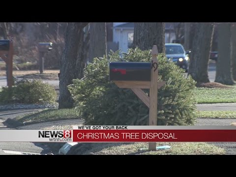 How to dispose of your Christmas tree