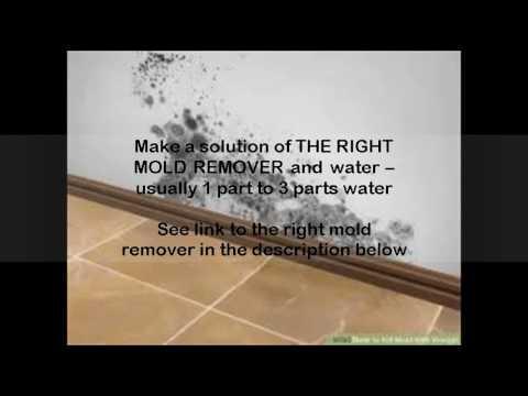 how to kill mold on walls
