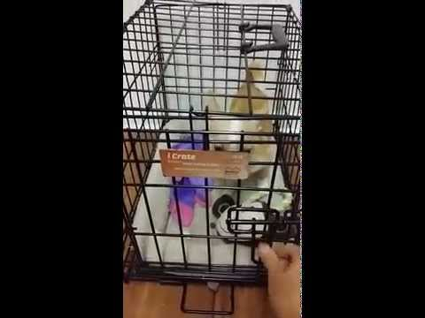 Crate training your puppy can be a positive experience!