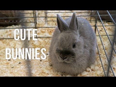 Cute Animals At The Fair - VLOG -