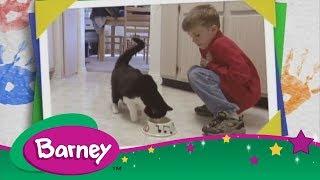 Barney 🐱 Here Kitty Kitty