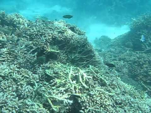 Lakshadweep - Agatti Island - Snorkeling