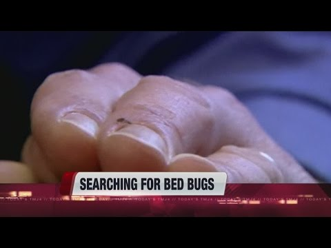 Holiday travel: bed bug prevention