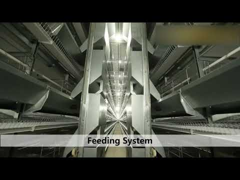 Poultry Farm House Design-How to Build A Layer Egg Chicken Cage