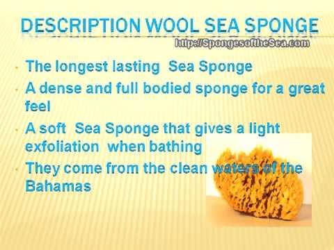 Natural Sea Sponges - High Quality Wool Sea Sponge Uses