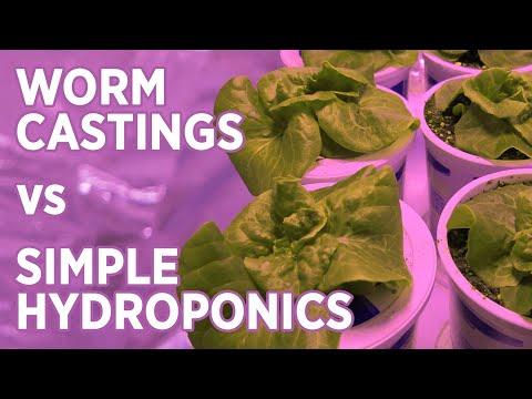 Kratky Hydroponic vs Worm Casting Potting Mix -Overview + Lettuce Test