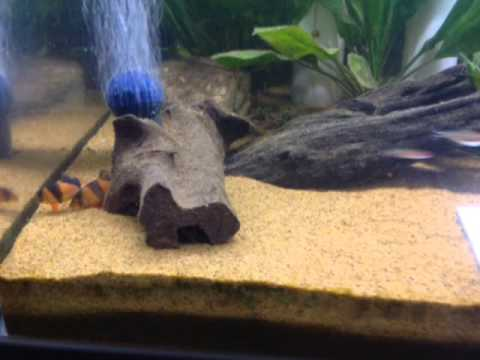 How to get rid of snails completely