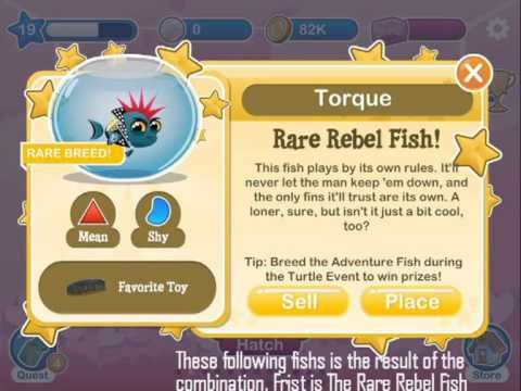 Rare Rebel, The Dancer and The Ninja fishes on Fish with Attitude