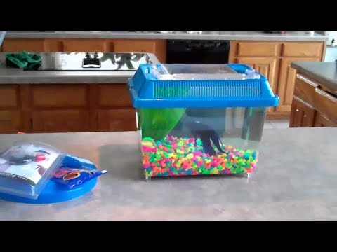 Healing Betta Fish by Your Own