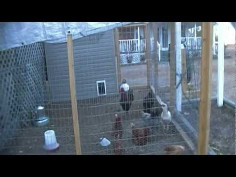 Homemade Easy to Clean Chicken Coop