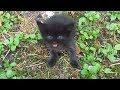 Baby Kitten Meow Very Loud On The Street mp3