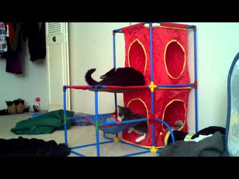 Bunk bed kittens