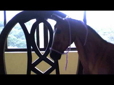 How to make a Breyer horse halter in minutes!