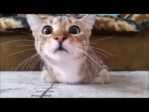 SCAREDY CAT WATCHING HORROR MOVIE