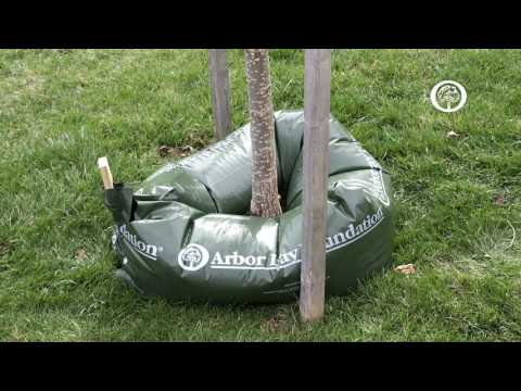 Ask an Arborist: How do I Know if my Trees Need Water?