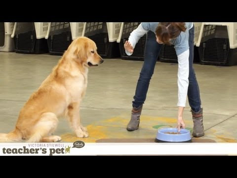 Impulse Control With Food | Teacher's Pet With Victoria Stilwell