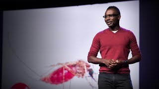 Why I study the most dangerous animal on earth -- mosquitoes | Fredros Okumu