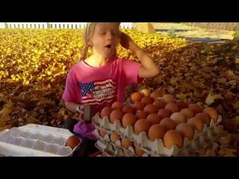 Roll Out Chicken Nest Box keeps eggs clean