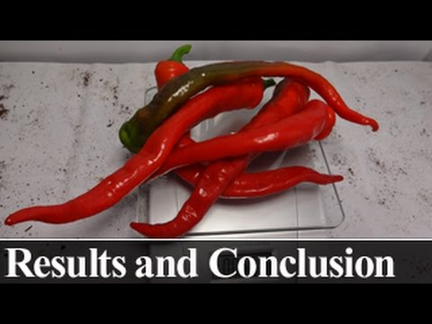 Pepper Plant Pruning Comparison, Season Results