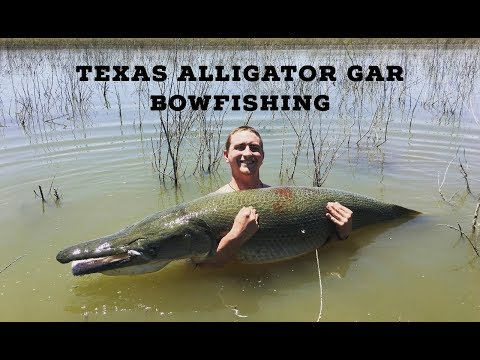 Texas Alligator Gar BowFishing