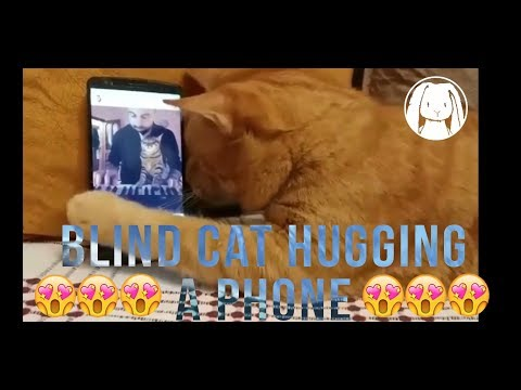 Blind cat hugging a phone whenever his favourite pianist is playing may make you weep