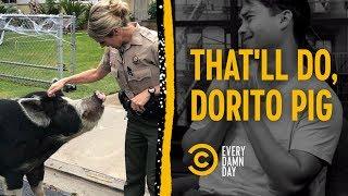 Dorito Pig Steals Everyone's Heart