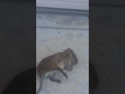 Omg there is a dead mouse outside my house