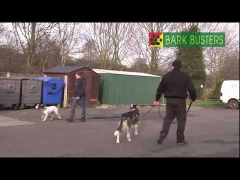 Bark Busters UK working with Dino at RSPCA Burton-upon-Trent & District Branch.