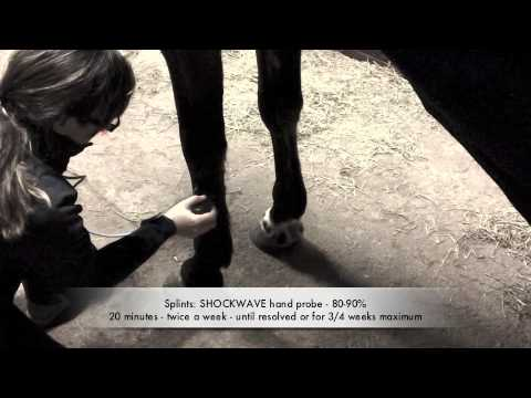 Horse splints (interosseous desmitis) - equine ultrasound therapy