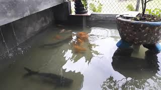 Ikanx Masih Malu2 Di Kasih Makan