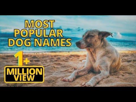 Top 20 Most Popular Dog Names 2018 !! Unique Puppy Names