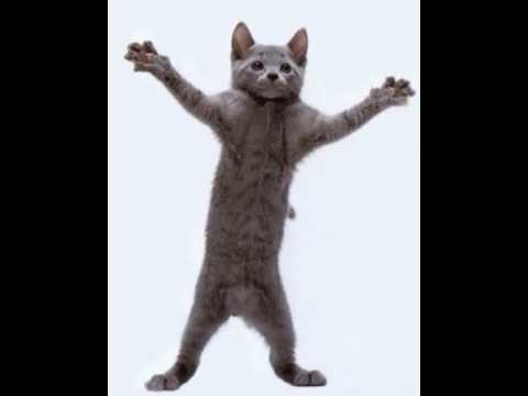 The dancing cat