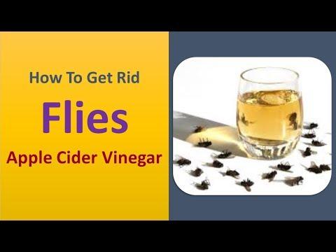 how to get rid flies - Apple Cider Vinegar