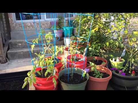 Homesteading - Garden Set Up