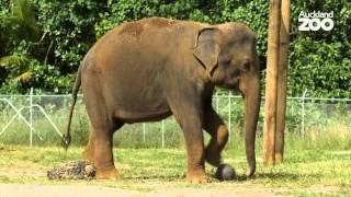 Zoo Tales - Anjalee's journey - Episode 3