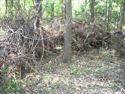 Subterranean Termites
