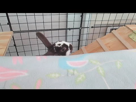 Springs Vlog   New Rabbit Cage!