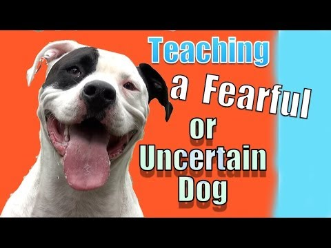 Working with a Fearful or Nervous Dog (Beaux)