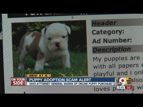 Dog buyers, beware: Ohio attorney general issues scam warning
