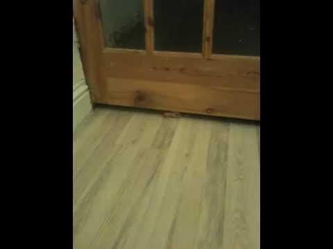 Cat Fit Under Door