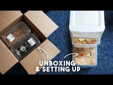 Unboxing & Setting Up Feeder Insects For Geckos!