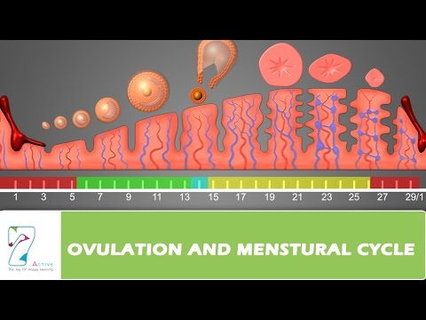 OVULATION AND MENSTURAL CYCLE